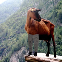 Goat in trousers
