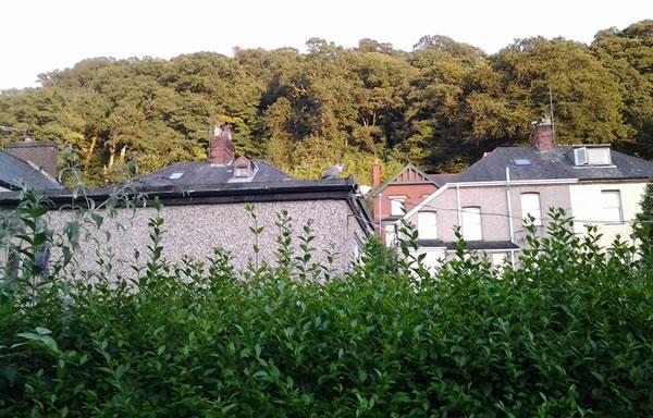 Mo challaid phriobaid / M'fhál pribhéad / My privet hedge