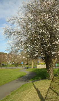 Hints of blossom on a tree